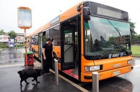 Šuo, paslapčiom nuo šeimininkės, keletą metų važinėjosi autobusu