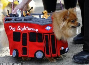 Šunų apranga – pagal šeimininkų pomėgius