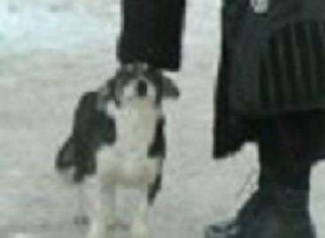 Išmestas autobusų stotelėje šuo tebelaukia savo šeimininkų
