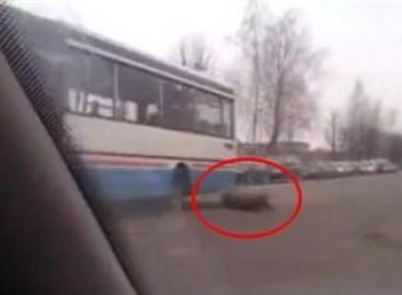 Briedis miesto gatvėje trenkėsi į autobusą