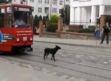 Šuo savarankiškai važinėja autobusu