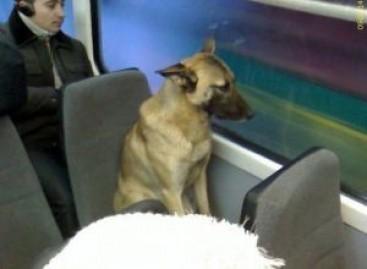 Benamis šuo į valgyklą važiuoja viešuoju transportu