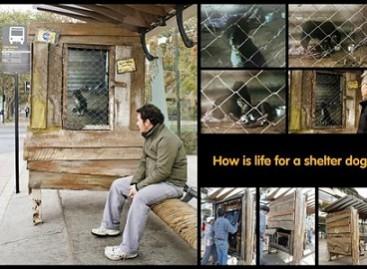 Autobusų stotelės – už gyvūnų teises