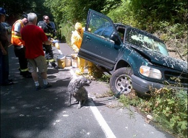 Kaltas Sargis, arba dažus vežusio automobilio avarija