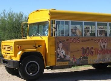 Autobusai – šunims