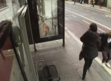 Autobuso laukiančius londoniečius atakavo ateiviai ir tigrai (video)