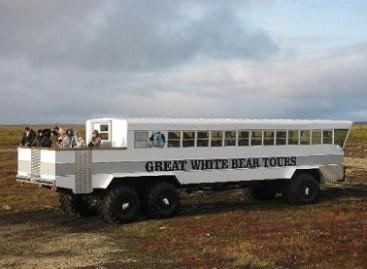 Tundros autobusais – pas baltąsias meškas