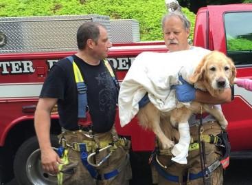 Šuo vedlys puolė po autobusu, kad išgelbėtų savo neregę šeimininkę