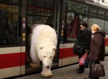 Keisti viešojo transporto keleiviai