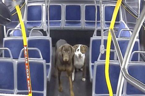 Autobuso vairuotoja pagelbėjo gatvėje pasimetusiems šunims